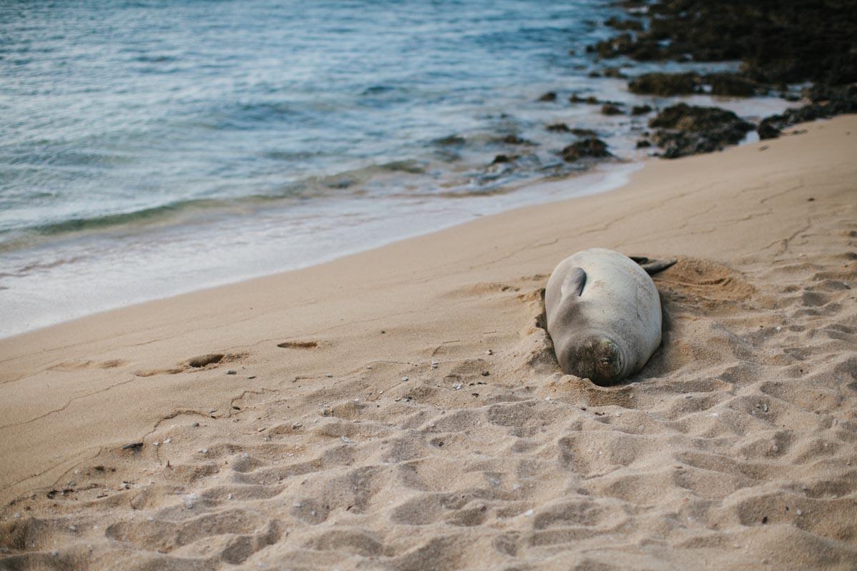 shelly wedding blog destination wedding turtle bay resort oahu hawaii-10